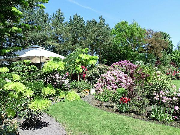 Einblick in einen Privatgarten mit blühenden Rhododendren