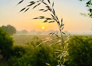 Gräser bewegen sich im Sonnenaufgang