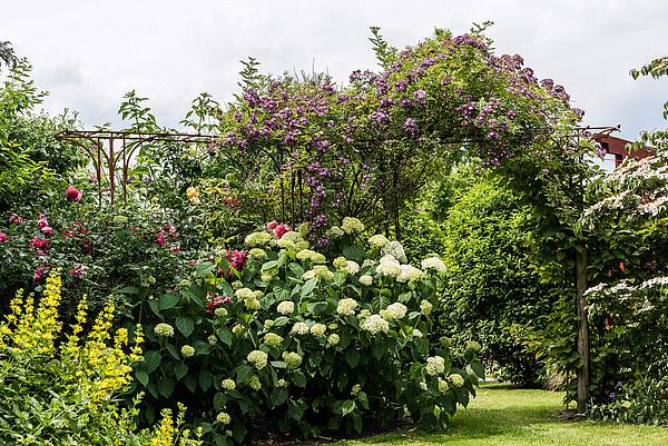 Blick in den Garten Landhof Tausendschön in Apen