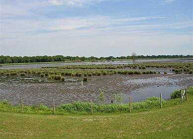 Das Bild zeigt einen Flussarm mit Vegetation der bei Ebbe in Teilen trocken gefallen ist.