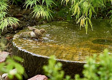 Ein kleiner Vogel badet in einer Vogeltränke