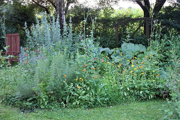 Blühende Rabatte inmitten eines Rasenstückes im Garten.