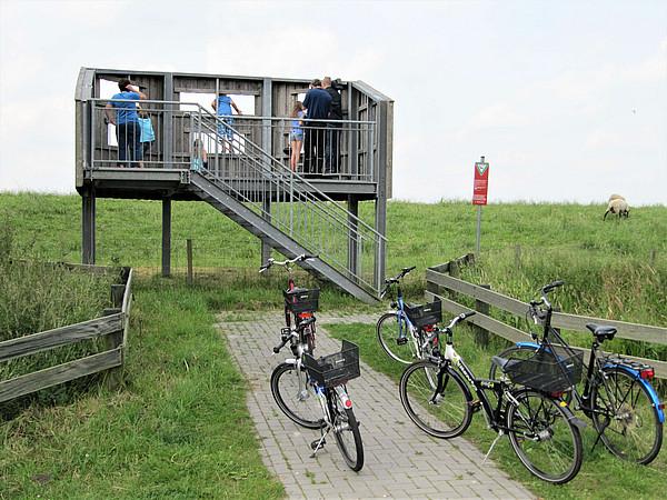 Das Bild zeigt einen hölzernen Aussichtsturm mit einer Personengruppe vor einem grünen Deich. Im Vordergrund stehen mehrere Fahrräder.
