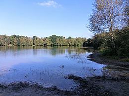 Das Bild zeigt einen See umgeben von belaubten Bäumen.
